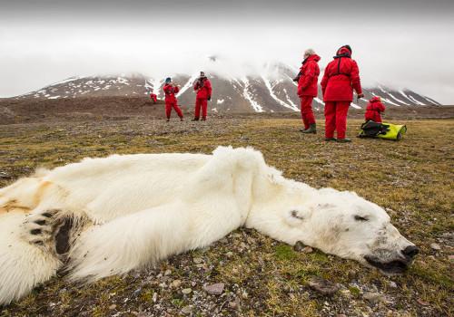 Climate-Chaos-Dead-Polar-Bear-1000-Web